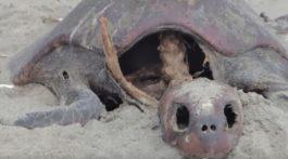 tortugas-muertas-Chiapas