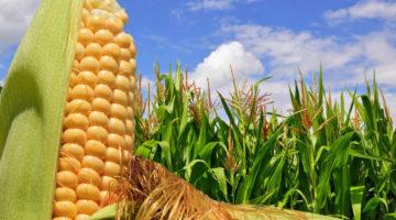 Agricultores de EE.UU.