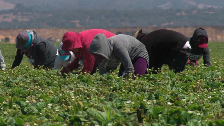 Propuesta de permisos de trabajo para trabajadores agrícolas y de servicio