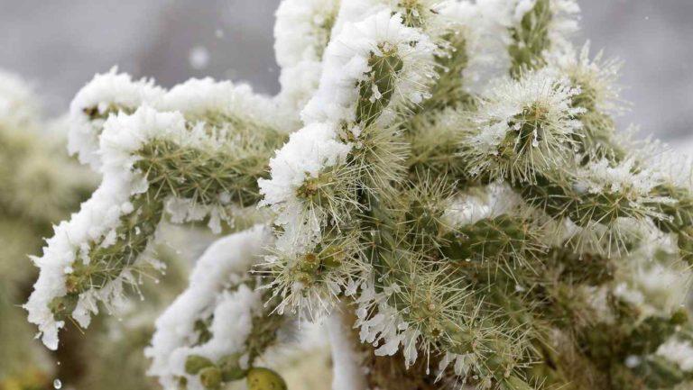 Nieva en el desierto de Arizona