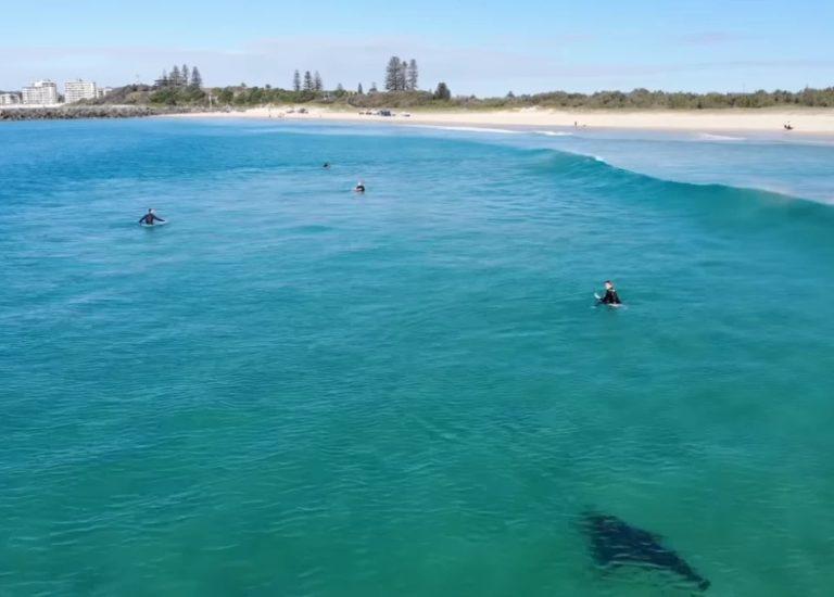 ¡Terror! Tiburón muerde a surfista en playa de Florida