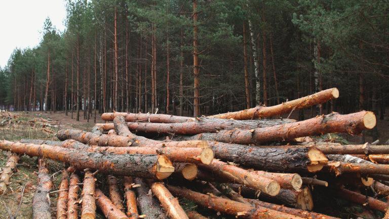 Alerta por tala y quema indiscriminada en el Darién
