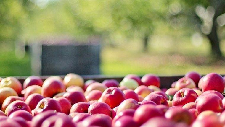 """Listeria: Manzanas """"contaminadas"""" llegaron a Florida y NC"""