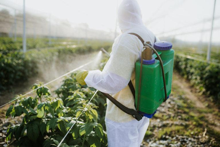 No más clorpirifos: California prohíbe uso del pesticida