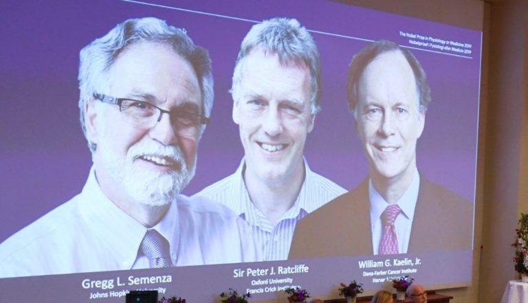 Nobel de Medicina a estudio sobre adaptación de células al oxígeno