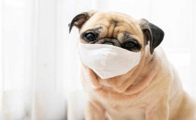 Perro en NC dio positivo a prueba de coronavirus
