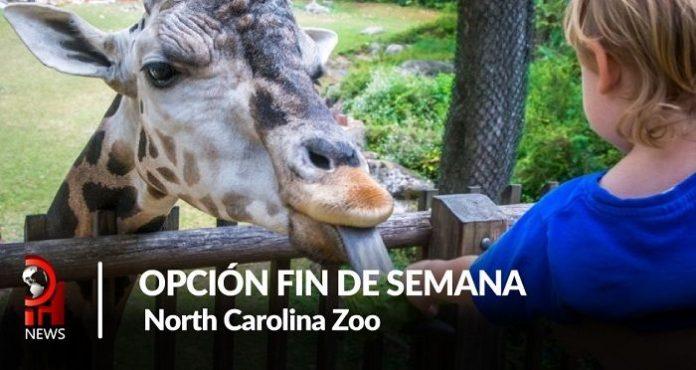 Opción fin de semana: North Carolina Zoo
