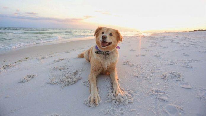 Día Mundial del Perro 21 de julio
