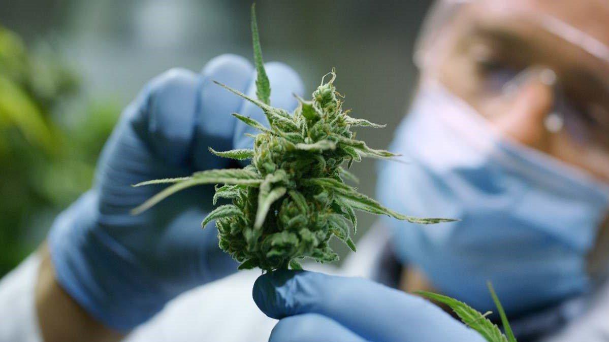 Legalización de Marihuana Medicinal avanza en Carolina del Norte