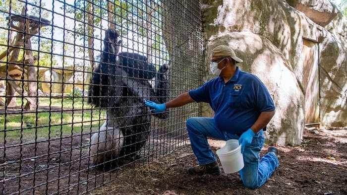 North Carolina Zoo no puede reabrir exhibiciones