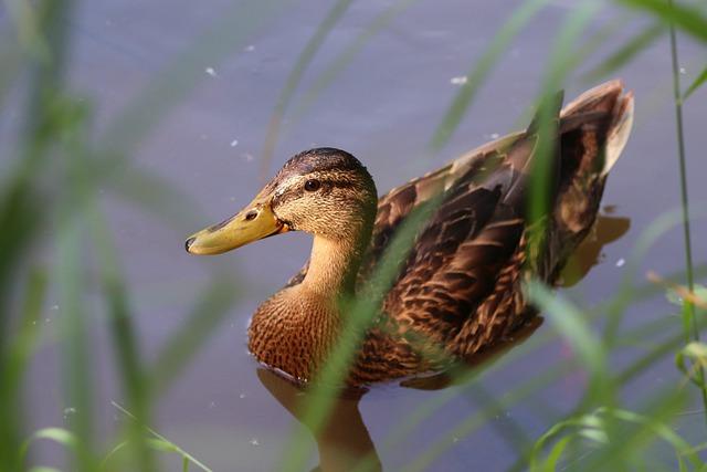 Retiran aves de parque en NC por crueldad extrema