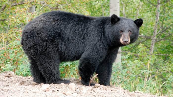 Un hombre enfrente cargos por matar a un oso en el patio de su vecino