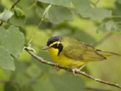 Opción fin de semana: Reservas naturales del condado Mecklenburg