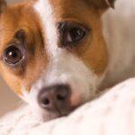 Adoptar a un perro un acto de amor