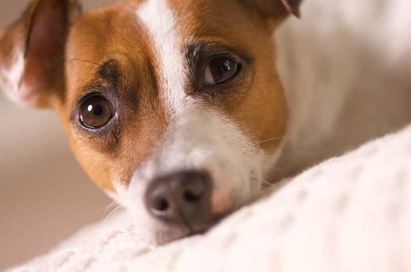 Adoptar a un perro es un acto de amor