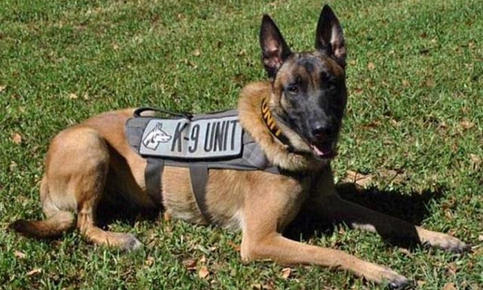 Hombre se declaró culpable de disparar a perro policía