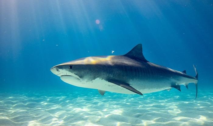Tiburón atacó a un bañista en playa de NC