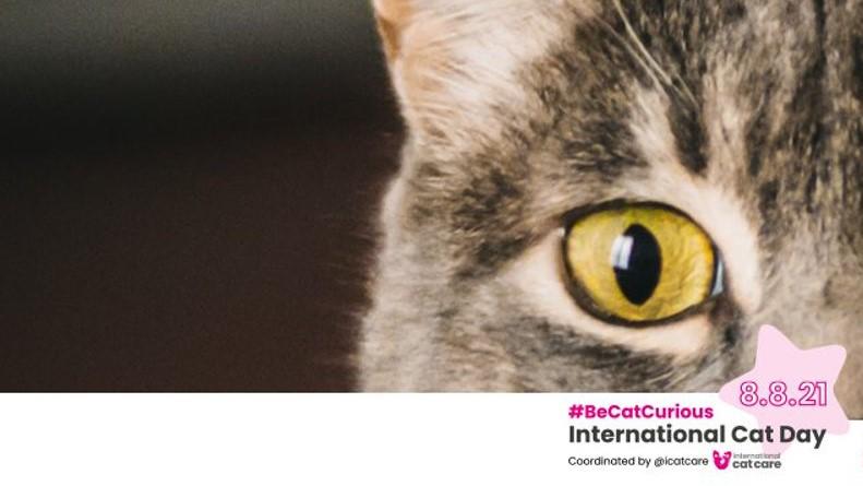 Tienes un gato y ¿No conoces el esquema de vacuna
