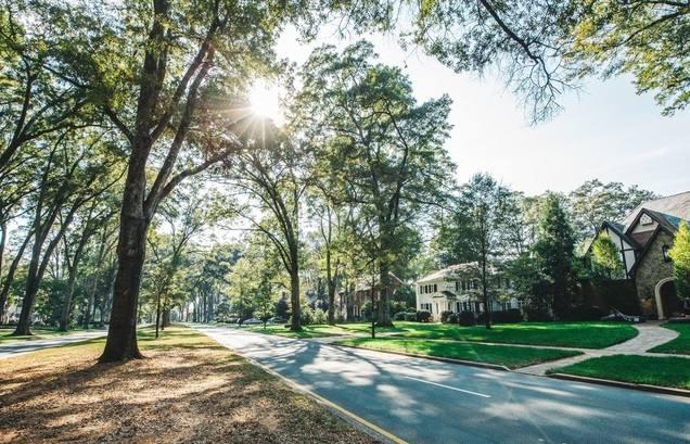 ¡Participa! El futuro de los árboles en Charlotte en una discusión virtual