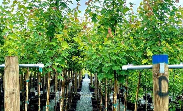 TreesCharlotte inaugura temporada de adopción de árboles