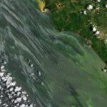 Lago de Maracaibo. Manchas de petróleo